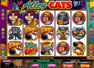 Alley Cats Video Slot Review